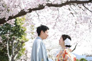 333951_長野_和装×桜