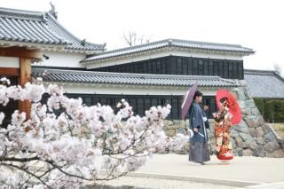250690_長野_和装×桜