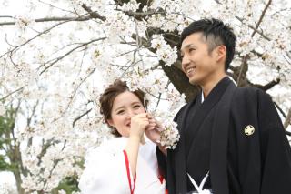 192514_長野_和装×桜