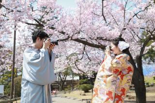 333953_長野_和装×桜