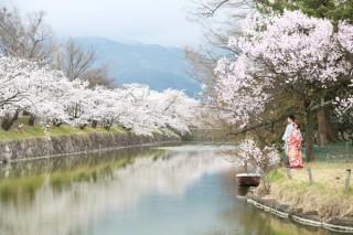 333970_長野_和装×桜
