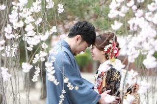 250691_長野_和装×桜