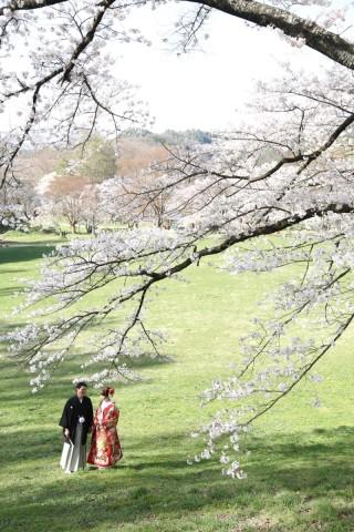 181432_長野_和装×桜