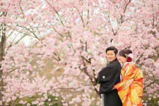 247437_京都_春の季節