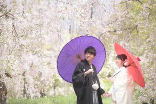 247453_京都_春の季節