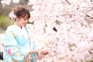 247450_京都_春の季節