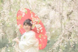 247452_京都_春の季節