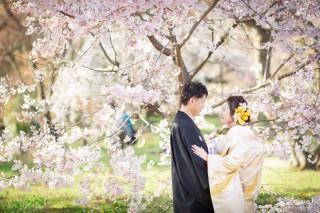 247713_京都_春の季節