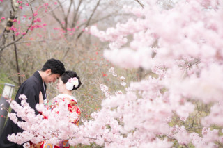 247436_京都_春の季節