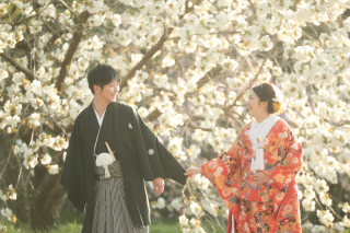 247712_京都_春の季節
