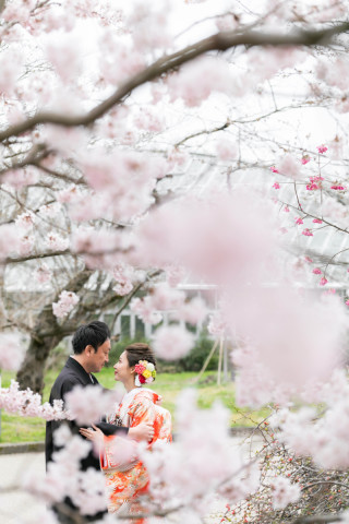 247433_京都_春の季節