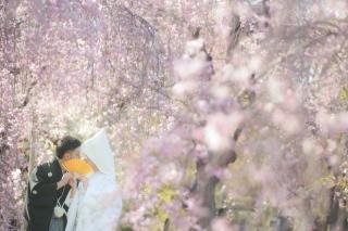 247455_京都_春の季節