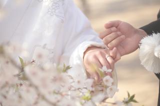 247457_京都_春の季節