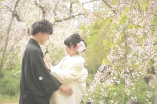 247451_京都_春の季節