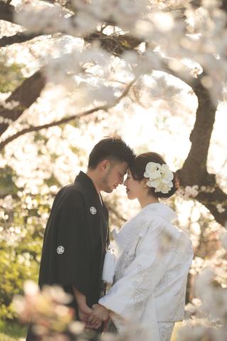 247456_京都_春の季節