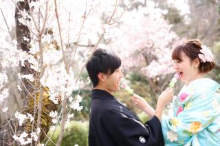 247447_京都_春の季節