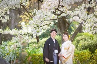 247714_京都_春の季節