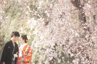 247711_京都_春の季節