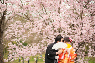 247438_京都_春の季節