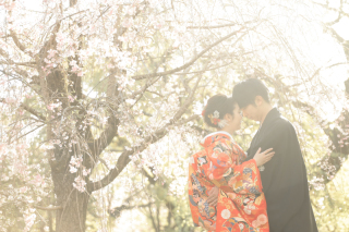247710_京都_春の季節