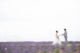 228127_北海道_ラベンダー、お花畑、鳥沼公園、富良野