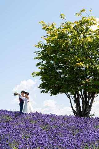 295510_北海道_ラベンダー、お花畑、鳥沼公園、富良野