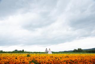 228114_北海道_ラベンダー、お花畑、鳥沼公園、富良野