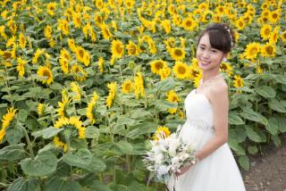 228120_北海道_ラベンダー、お花畑、鳥沼公園、富良野