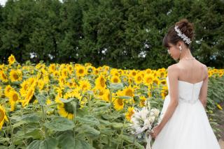 228118_北海道_ラベンダー、お花畑、鳥沼公園、富良野