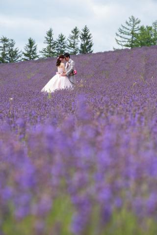 228124_北海道_ラベンダー、お花畑、鳥沼公園、富良野