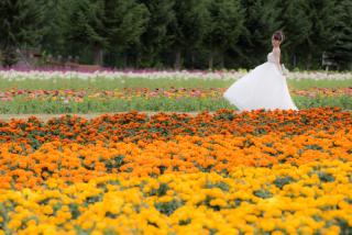 228123_北海道_ラベンダー、お花畑、鳥沼公園、富良野