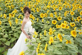228117_北海道_ラベンダー、お花畑、鳥沼公園、富良野