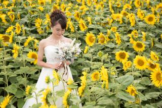 228121_北海道_ラベンダー、お花畑、鳥沼公園、富良野