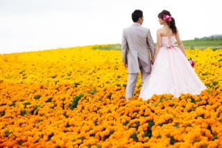 228115_北海道_ラベンダー、お花畑、鳥沼公園、富良野