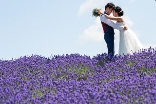 295508_北海道_ラベンダー、お花畑、鳥沼公園、富良野