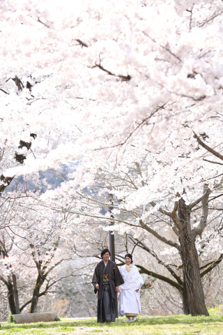 312798_宮城_【2021年】桜ロケーションイメージ
