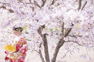 312816_京都_【2021年】桜ロケーションイメージ
