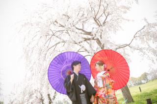 233819_大阪_桜◎和装Photo