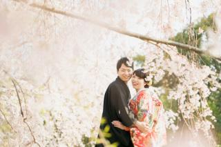 233826_大阪_桜◎和装Photo