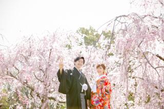 233815_大阪_桜◎和装Photo