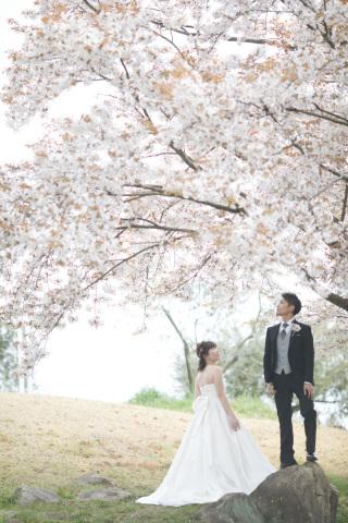 320560_岡山_牛窓オリーブ園(ドレス)