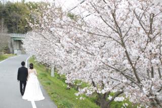 320557_岡山_牛窓オリーブ園(ドレス)